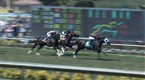 Watch Players Network - Breeder's Cup 'Fectas Online