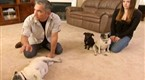 Dog Whisperer Season 5 Episode 17