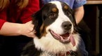 Watch Good Dog! Season 4 Episode 12 - Playful Dogs Online