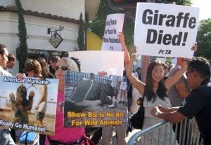 PETA Protests 'Zookeeper' Premiere, Blames Giraffe Death on Film's Producers
